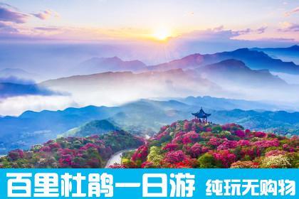 【贵州周边一日游】贵州毕节百里杜鹃一日游 纯玩无购物 早春赏花