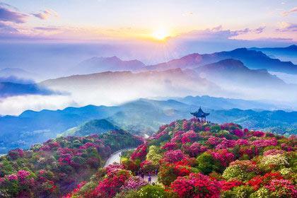 贵州毕节百里杜鹃一日游 纯玩无购物 早春赏花